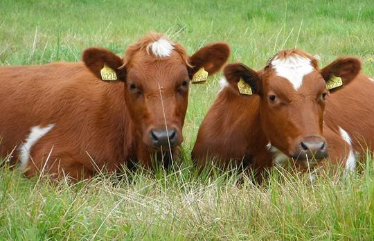 Kjøtt fra dyr som har levd et godt liv!